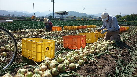 140516 onion.jpg