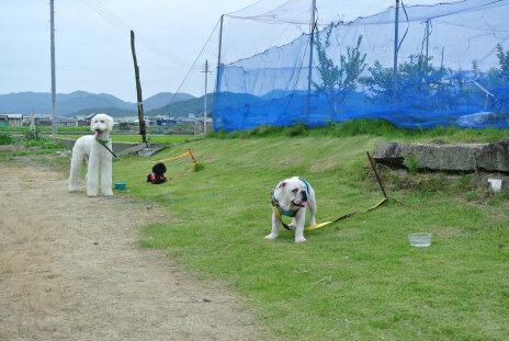 140706 dogs.jpg