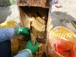 20100809ハチミツいっぱいの巣.jpg