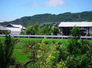 20110713保育園児帰り道河原.jpg