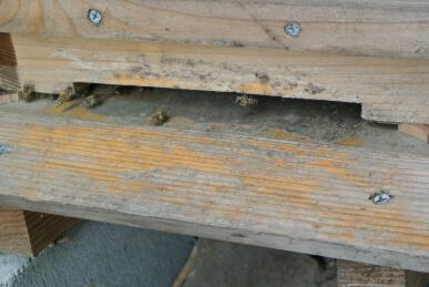 20120618 本日の蜜蜂.jpg