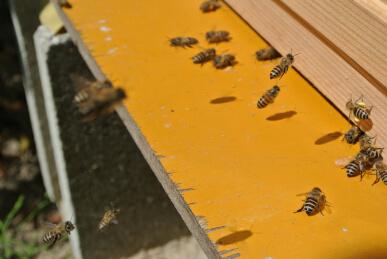20130405 蜜蜂大忙し.jpg