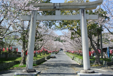 20130405 賀集八幡神社 参道の坂の桜のトンネル.jpg