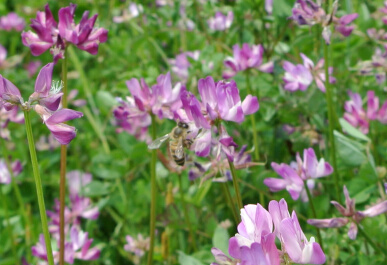 20130504 bee.jpg