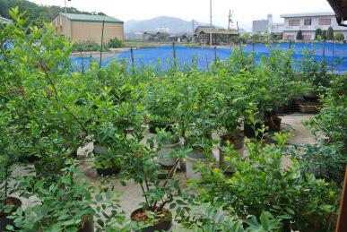 20130516 planter.jpg