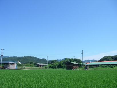 淡路島の観光農園そらふぁから空をのぞむ20100722b.jpg