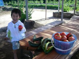 夏野菜が盛りかごにいっぱい
