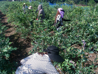 20100719i耕作放棄地だったところ.jpg