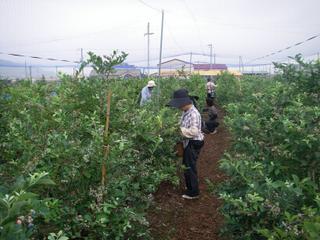 20100707ひょっとして日本一早い開園時間?