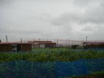 20100711f南淡路のブルーベリー.jpg