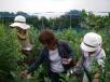 20100705a南淡路のブルーベリー農園へようこそ!